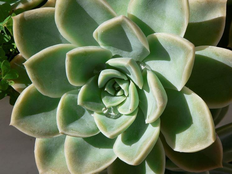 curare piante grasse