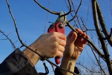 potatura alberi da frutti