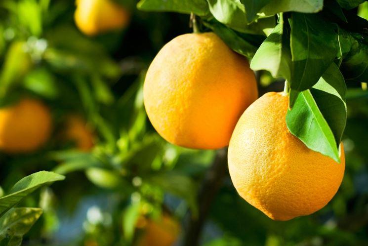 arance valencia
