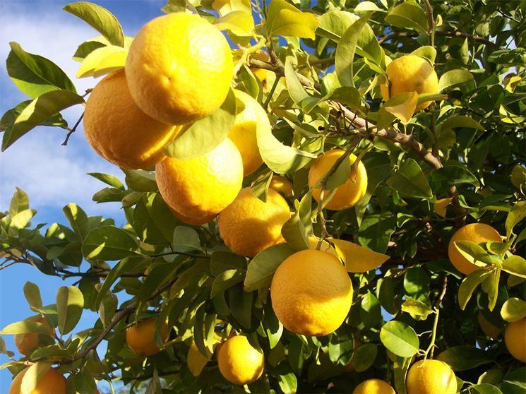 potare arance