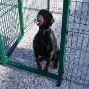 recinzioni per cani in giardino