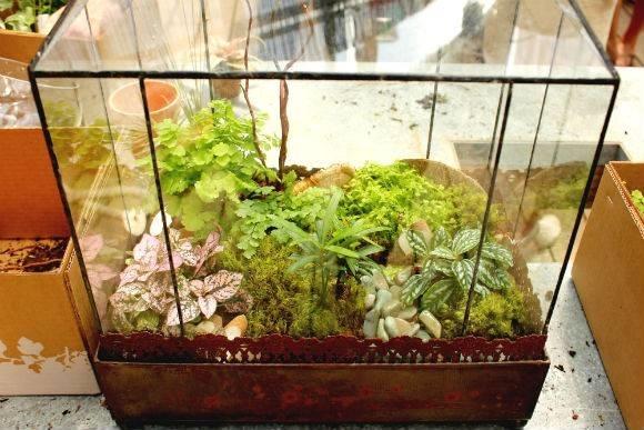Costruire un terrario fai da te serre for Terrario per tartarughe in giardino