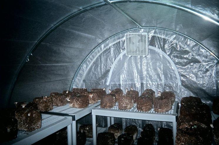 Esempio di serra per funghi