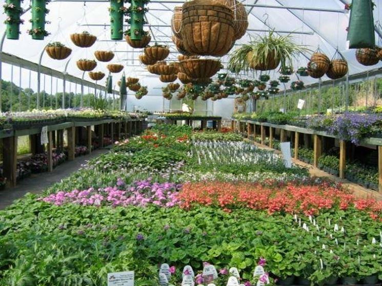 Serre per piante grasse serre