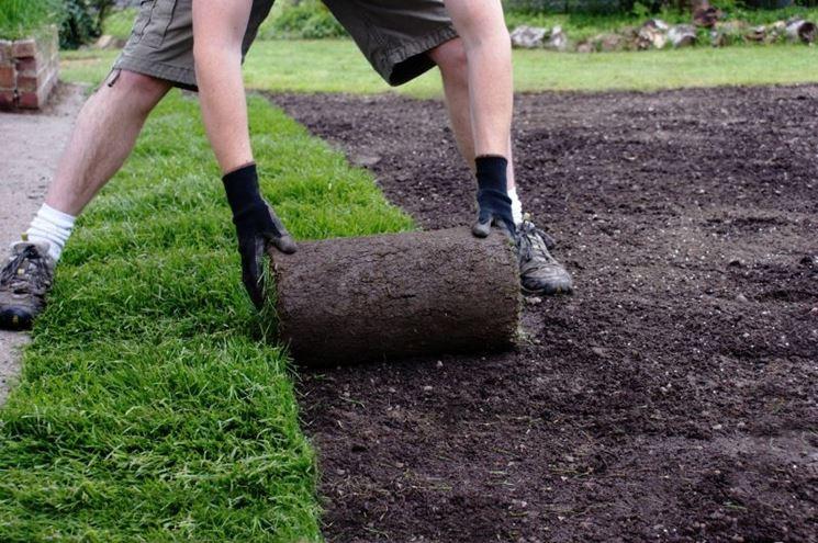 stesura rotoli di erba