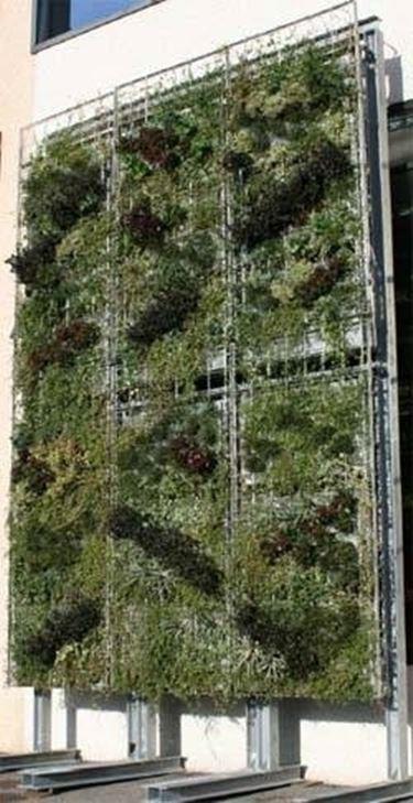 giardini verticali - tipi di giardini - Piante Per Giardini Verticali