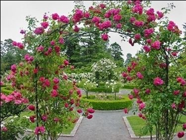 Giardini tipi di giardini giardino che passione