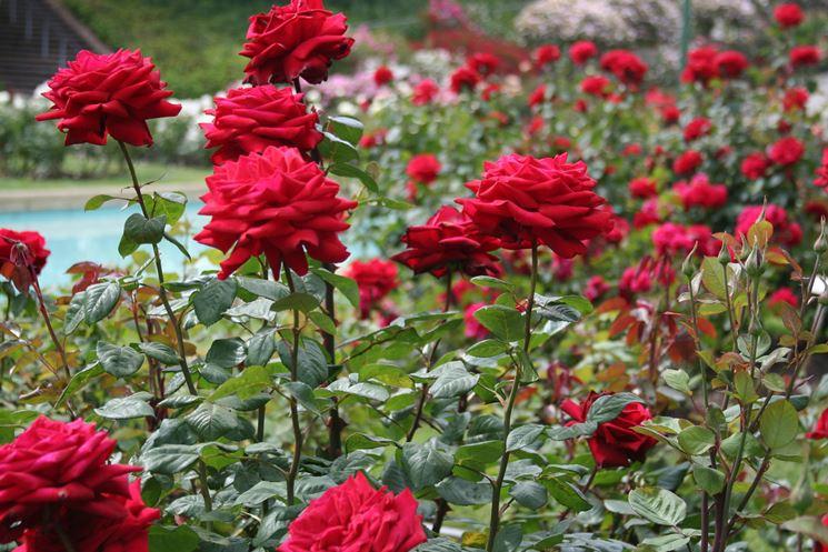 Giardino di rose tipi di giardini
