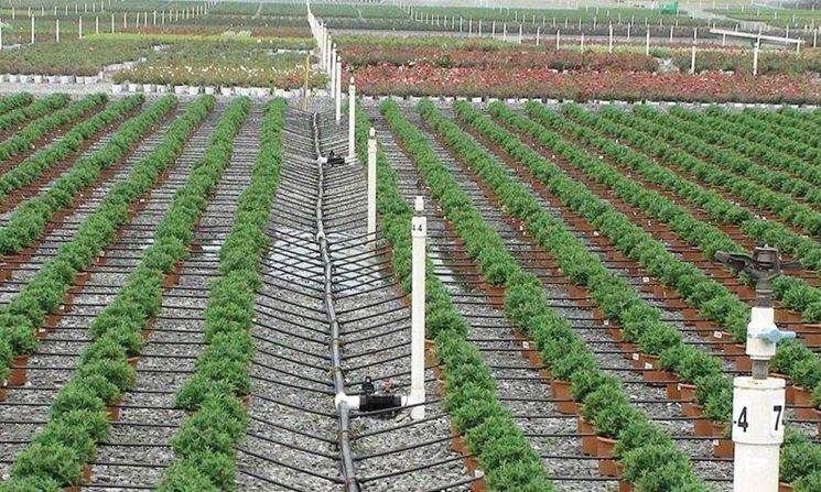 impianto irrigazione a goccia
