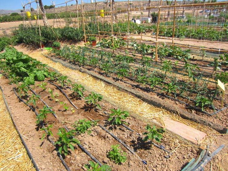 Tubo gocciolante tubi attrezzatura giardino for Sistemi di irrigazione giardino