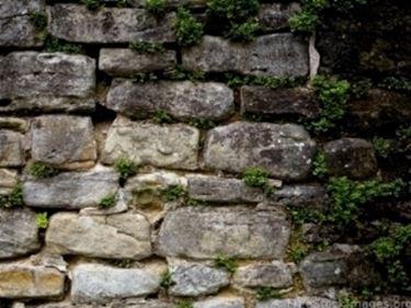 muro con erbacce