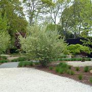 giardino piastrellato
