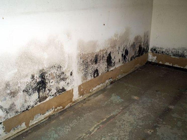 parete interna umida