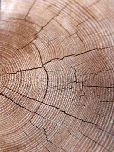 sezione trave legno