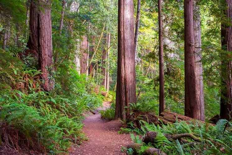 alberi ad alto fusto