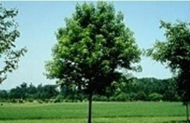 albero caducifoglie