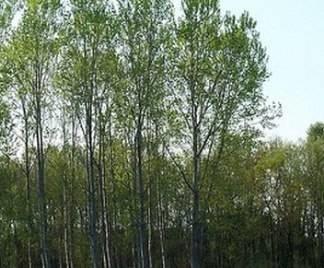 Alberi da giardino a crescita rapida alberi - Alberi da giardino a crescita rapida ...