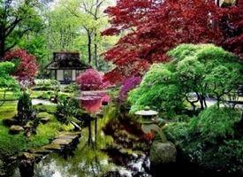 Alberi giapponesi
