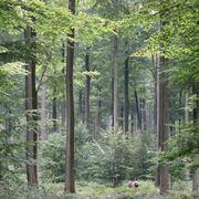 alberi di latifoglie