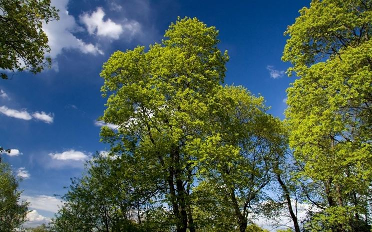 alberi fusto