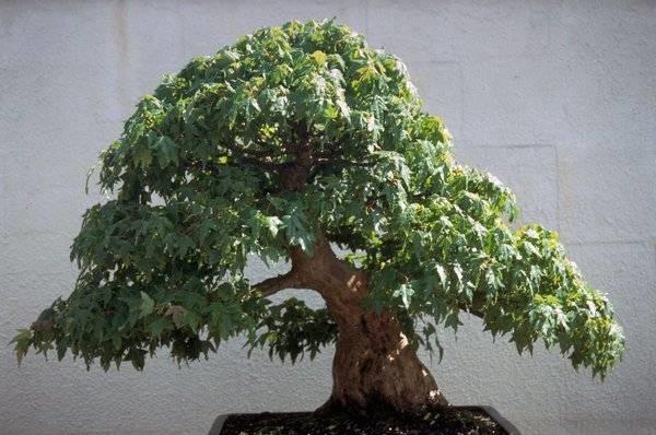Bonsai artificiali bonsai