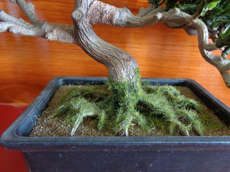 Un bonsai artificiale