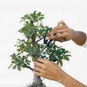 bonsai come curarli