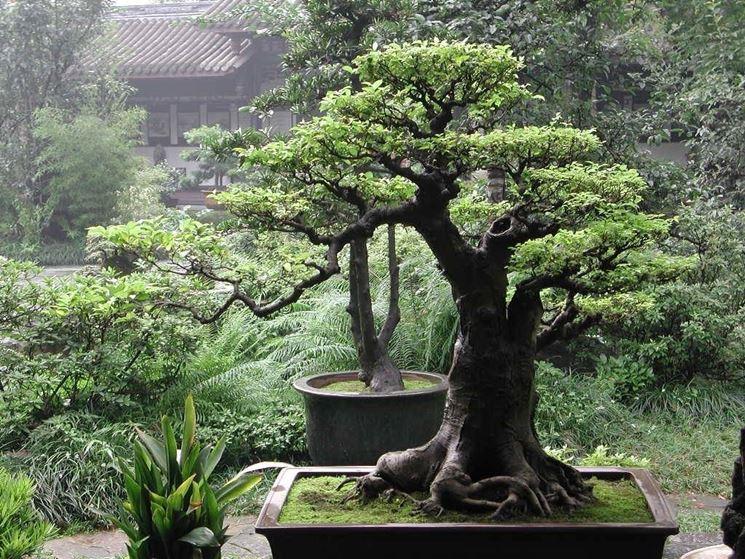La diverse varietà di bonsai