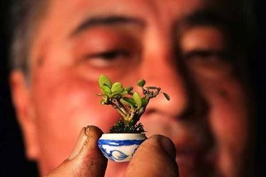 bonsai in miniatura