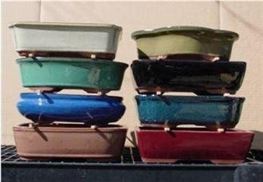 vasi colorati per bonsai