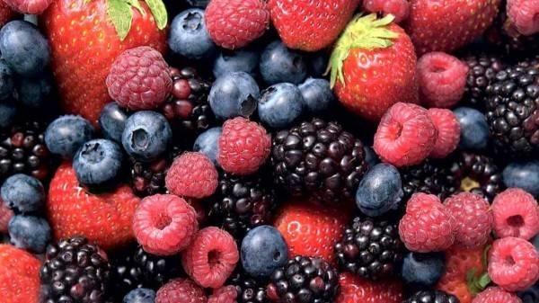 Piante Di Frutti Di Bosco : Frutti di bosco coltivazione frutteto