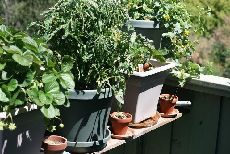 coltivare vegetali in terrazzo