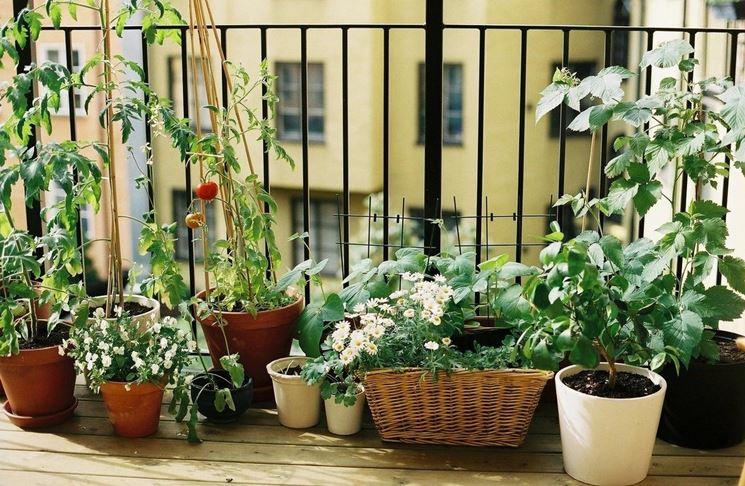 coltivazione in terrazzo