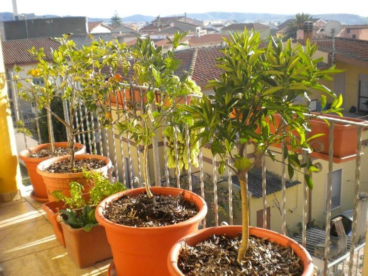 frutteto sul balcone