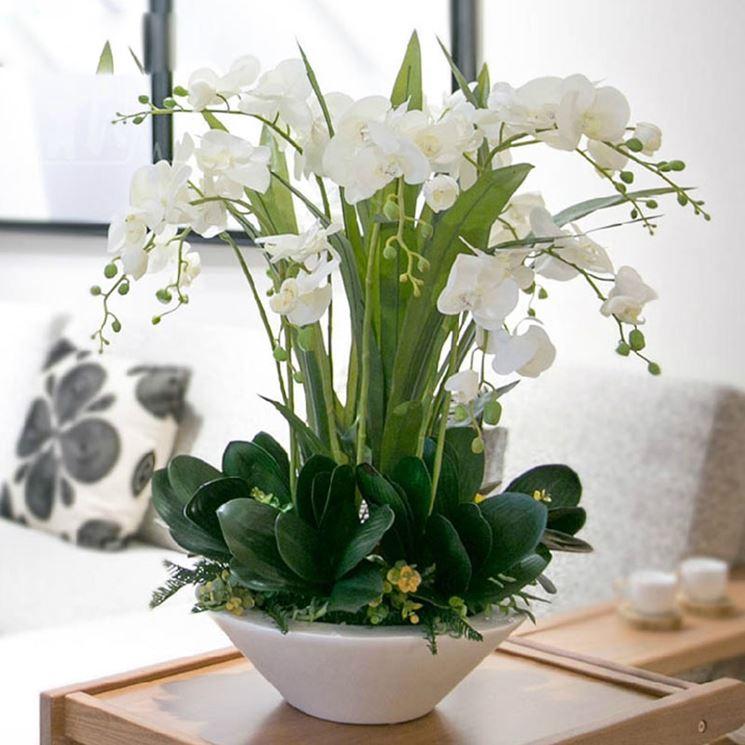 Vaso di orchidee bianche