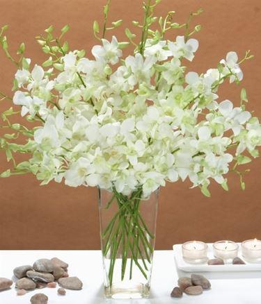 fiori orchidee dendrobium