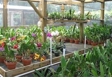 Illuminazione led orchidee: illuminazione led per piante. nuove