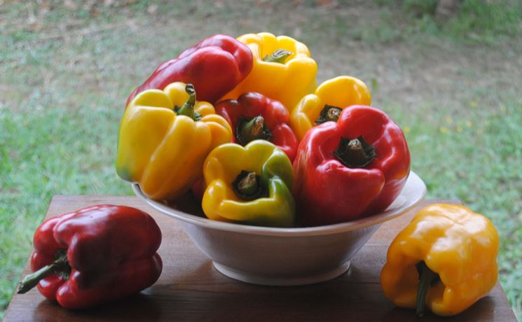 peperone pianta