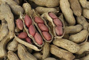 coltivazioni arachidi