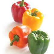 coltivazione peperoni