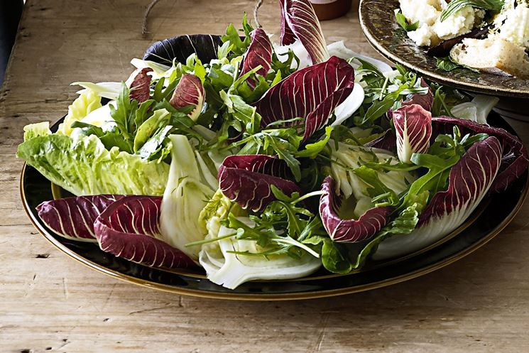 Radicchio in insalata
