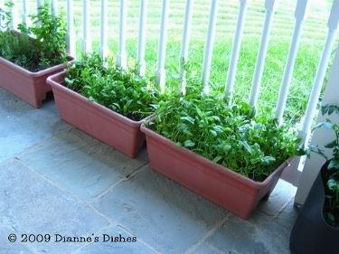coltivaizone spinaci