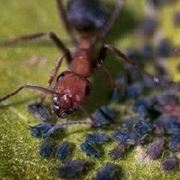 come allontanare le formiche dalle piante