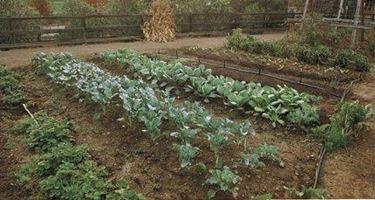 lavori dell'orto in gennaio