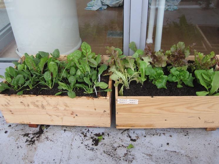 orti domestici sostenibili orto come fare orti