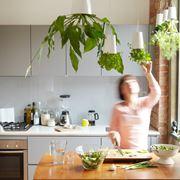 piante aromatiche appese