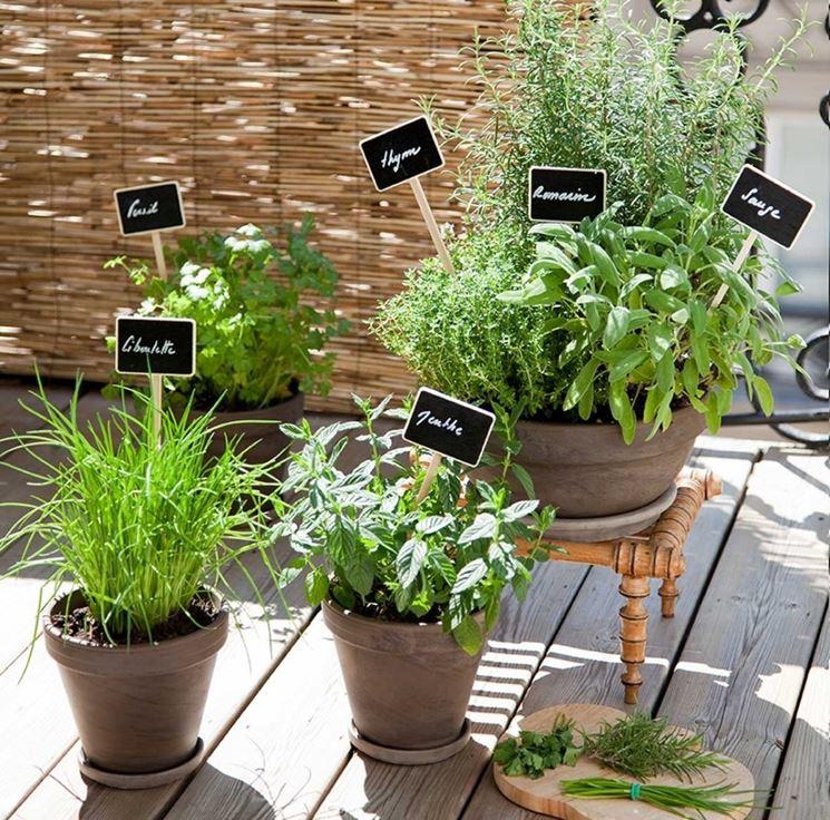 piante aromatiche in casa orto coltivare piante