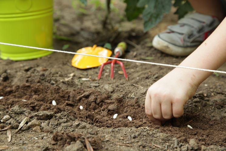 tipi di sementi per orto