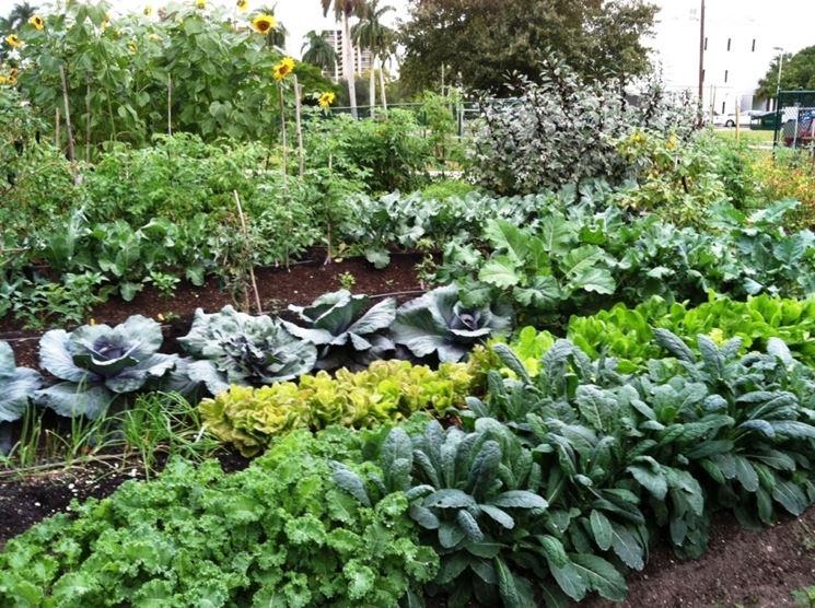 Creare un orto in giardino