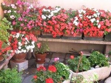Balconi fioriti piante appartamento - Terrazzi arredati e fioriti ...